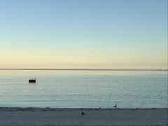 Luminous End // Corpus Christi, TX (David Huante) Tags: corpus christi beach ocean seagulls birds water sky dusk twilight sunset light blue gulf texas nature outside explore