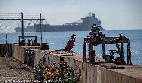 Pier 50 Metal Birds 4-2019