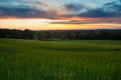 Sunset over Barcombe (bertie.carter.photography) Tags: sunset barcombe colourful sussex eastsussex lewes fluffy clouds landscape breathtakinglandscapes grass grassland field yellow green beautiful