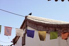 Dolma Ling/5 (Cath Forrest) Tags: mongolia ulaanbaatar religion buddhist temple roof bird prayerflags sky