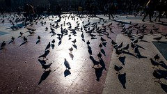 * (Timos L) Tags: street life candid urban birds canon g5x timosl barcelona spain plaza catalunya