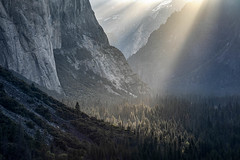 Sunbeams Below El Capitan (Kirk Lougheed) Tags: california elcap elcapitan usa unitedstates yosemite yosemitenationalpark yosemitevalley crepuscularrays forest landscape nationalpark outdoor park sky spring sunbeam