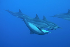 Birds do it. Bees do it. Dolphins in the deep blue seas do it. (BarryFackler) Tags: