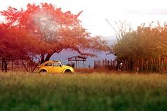 En algún rincón de Colombia. (JuanSeW) Tags: colombia volkswagen vw bug beetle paisaje landscape abandoned abandono atardecer sunset aircooled car carro