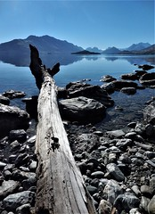 rhapsody in blue (SM Tham) Tags: newzealand southisland lakewakatipu water mountains sky blue reflections fallen tree trunk wood stones rocks landscape