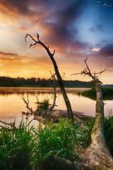 IMG_8992 (Artur Surgał) Tags: polska krainabugu nadbużańskiparkkrajobrazowy wschódsłońca rzeka bug drzewo widok krajobraz niebo chmury canon irixlens irix15mm poland river sunrise landscape scenery clouds sky colorful tree