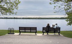 htree on a benchB (tesseract33) Tags: tesseract33 nikon world art travel quebec montreal lachine d750 peter langnikon d750comox photographerbenchespark benchtogetherdogdogsst lawerence river