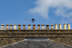Crow and Chimneys, Catford (London Less Travelled) Tags: uk unitedkingdom britain england london southlondon lewisham city urban suburb suburbs suburban suburbia catford ladywell crow roof chimney