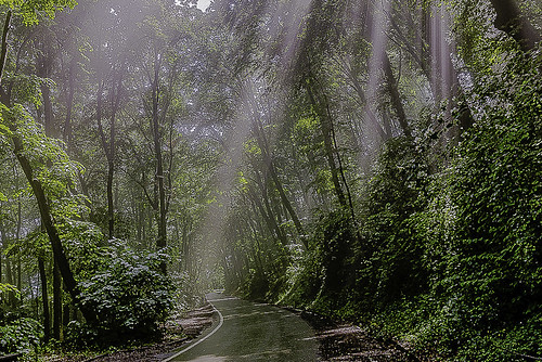 Magic Forest at the Avala.......after the heavy rain