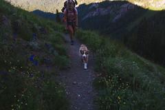 Tubal Cain Trail (gmolteni) Tags: pnw washington olympics national park mountain trail hiking camping