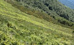 shades of green (raffaele pagani) Tags: panorama alpegiumello valsassina lagodicomo comolake provinciadilecco northitaly lombardia lombardy italia italy canon