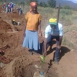 Tree planting 2 by