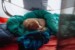 Dug (gmolteni) Tags: nap puppy dog portrait pnw washington olympics national park camping backpacking tent hiking