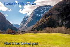 Smokes (Tony Shertila) Tags: cruise europe pig øvreeidfjord hordaland norway 20170414095128 sayings