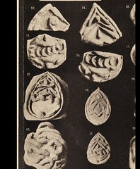 This image is taken from Page 138 of Anatomisch-archäologische Studien (Medical Heritage Library, Inc.) Tags: archaeology votive offerings wellcomelibrary ukmhl medicalheritagelibrary europeanlibraries date1901 idb29009534