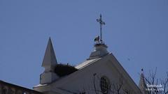 Stork Town (Stefan Beckhusen) Tags: stork bird nest church crucifix roof bluesky faro portugal europe lowangle