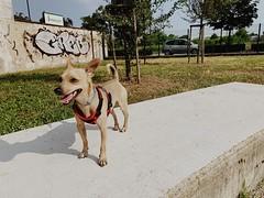 #Dog #Cane #Pippo #AmicoDellUomo #Natura (giuseppecotroneo) Tags: dog cane pippo amicodelluomo natura