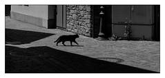 42 [titre chat noir] (Armin Fuchs) Tags: arminfuchs lavillelaplusdangereuse würzburg veitshöchheim cat chatnoir anonymousvisitor thomaslistl wolfiwolf jazzinbaggies diagonal light shadow fujixt3 obscur