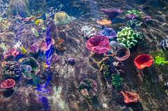 Visit to the Sea Life Aquarium (Paul Jacobson) Tags: aquarium australia melbourne family