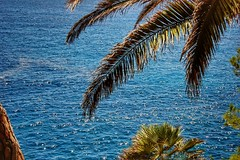 Blue (Claire Fun) Tags: sea blue med spain costabrava blanes palm tree