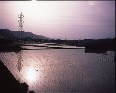 (✞bens▲n) Tags: mamiya 7ii provia100f 80mm f4 film analogue 6x7 ricefields field water evening light reflection nagano japan
