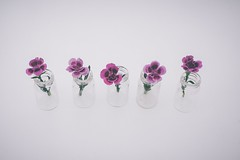 Dianthus (tanyalinskey) Tags: minimal crazytuesday dianthus five