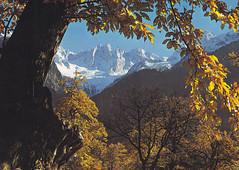 Postkarte / Schweiz (micky the pixel) Tags: postkarte postcard ephemera schweiz suisse switzerland bergell kantongraubünden grischun landschaft landscape wald forest baum tree kastanienbaum gebirge mountains alpen alps scioragruppe malojapass engadin