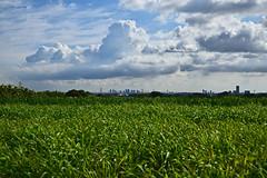 20190618_022_2 (まさちゃん) Tags: スカイツリー 空 雲 光 長閑