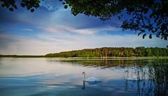 Landscape. (augustynbatko) Tags: landscape lake nature sky clouds trees birds swans buildings water