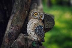 Little Owl (natlou_2506) Tags: owl animal animals owls nocturnal glass amateur photographer photography nikond3300 nikon little ornament tree nature trees green brown bokeh blur