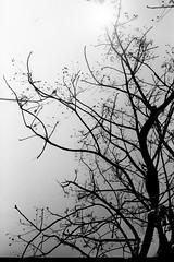 Negative0-17-17(1) (pingsfoto.2) Tags: konica 現場監督 現場監督28hg analog analogue analoguephotograph bwfilm bnw bnwfilm blackandwhite bwphoto bwphotograph bwphotography bw ilford ilfordpan ilfordfilm ilfordpan400 analogphoto analogphotography landscape taiwan nature camera taipei chill reco filmcamera nikoncamera pentaxcamera motionpicturefilm konicacamera film filmphotography fujifilm filmlover filmphoto foto filmonly fuji flower 35mmfilm nikonfg20 shotonfilm kodakfilm expiredfilm 35mm photo photograph photographer photography pentax expired snap snapshot