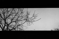 Negative0-16-16(1) (pingsfoto.2) Tags: konica 現場監督 現場監督28hg analog analogue analoguephotograph bwfilm bnw bnwfilm blackandwhite bwphoto bwphotograph bwphotography bw ilford ilfordpan ilfordfilm ilfordpan400 analogphoto analogphotography landscape taiwan nature camera taipei chill reco filmcamera nikoncamera pentaxcamera motionpicturefilm konicacamera film filmphotography fujifilm filmlover filmphoto foto filmonly fuji flower 35mmfilm nikonfg20 shotonfilm kodakfilm expiredfilm 35mm photo photograph photographer photography pentax expired snap snapshot