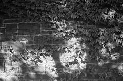 FRB No. 50 - Svema Foto 200 - Roll No. 1 (Kodak D-76) (Alex Luyckx) Tags: milton ontario canada downtown historicdowntown urban town historic filmreviewblog filmreview review media medium nikon fa nikonfa slr 135 35mm aisnikkor35mm128 svema svemafoto200 foto200 asa200 filmphotographyproject fpp kodak d76 kodakd76 stock 10 nikoncoolscanved adobephotoshopcc bw blackwhite filmphotography believeinfilm filmisalive filmisnotdead cpol
