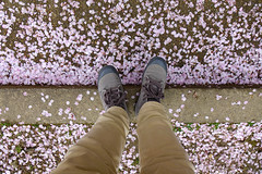 Man legs in shoes on cherry flower petals (phuong.sg@gmail.com) Tags: background bloom blossoming boot canvas casual day decorative environment fashion fashionable floral flower foot footwear frame hanami japan jeans keds lifestyle natural nature outdoor pair people petals pink sakura shoe shoes sneakers sport sportswear spring style texture top travel view vintage walk white wooden young