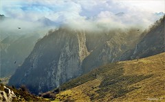 VOLANDO ALTO (Angelines3) Tags: martesdenubes nwn nubes naturaleza montañas cielo colores aves picosdeeuropa asturias
