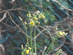 Wildflower (river crane sanctuary) Tags: wildflowers rivercranesanctuary