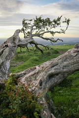 Devils Dyke (Liam.Rooney) Tags: devilsdyke brighton landscape oldtree sussex eastsussex treeroots verticallandscape canon40mm canon6d canon 40mmpancake
