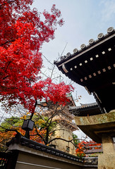 Ancient temple with autumn trees (phuong.sg@gmail.com) Tags: ancient architecture asia asian autumn autumnal buddhism buddhist building cityscape cultural culture destination entrance gate heritage historical history japan japanese kiyomizu kiyomizudera kyoto landmark leaves oriental pagoda place red religion religious roof shinto shrine symbol temple tourism tower traditional travel unesco wooden world
