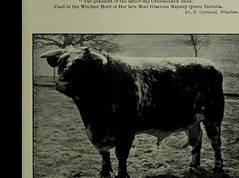 This image is taken from Farm live stock of Great Britain (Medical Heritage Library, Inc.) Tags: animals domestic animal husbandry wellcomelibrary ukmhl medicalheritagelibrary europeanlibraries date1907 idb28083787