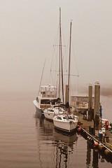 Morning Fog (JavaJoba) Tags: