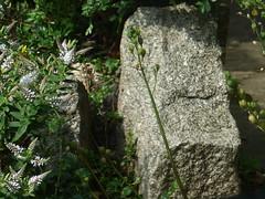 Granite in the Garden (river crane sanctuary) Tags: granite garden rivercranesanctuary