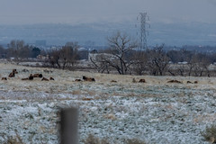 A-6542 (markbyzewski) Tags: rockymountainarsenalnationalwildliferefuge snow deer raptor bird landscape denver colorado