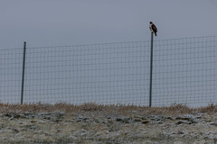 A-6539 (markbyzewski) Tags: rockymountainarsenalnationalwildliferefuge snow deer raptor bird landscape denver colorado