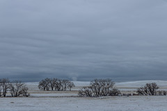 A-6526 (markbyzewski) Tags: rockymountainarsenalnationalwildliferefuge snow deer raptor bird landscape denver colorado