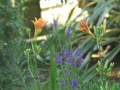 Garden Colours (river crane sanctuary) Tags: flowers garden rivercranesanctuary