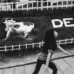 Looking at.... (Andy @ Pang Ket Vui ( shootx2 )) Tags: desa farm sabah borneo milk cow kundasan fujifilm x100f girl black white photo