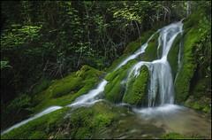 Rio Cerezuelo. (antoniocamero21) Tags: foto color sony paisaje agua río verde corriente plantas composición cascada cerezuelo cazorla andalucía musgo