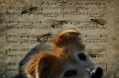 Musica (patrick.verstappen) Tags: rusty dog pet gingelom google hand patrick verstappen hund ipernity ipiccy imagine inspiration image portrait photo picassa pinterest pat porträt portret rest sigma nikon d5100 sweet stillife girl dreaming lovely winter light perro dulce retrato querido flickvän porträtt cachorro doce adorável amiga querida chien doux charmant amie chéri süss schön freundin liebling barbie music musica song notes xxx look sweetheart patrickverstappen belgium bélgica s