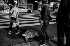 Hiroshima - Shintenchi (-dow-) Tags: hiroshima giappone japan turtle banana 日本 tartaruga 広島 shintenchi monochrome fujifilm x70