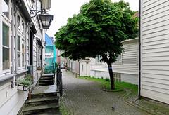 Grønnevollen in the quarter of Marken (2) (Odd Roar Aalborg) Tags: grønnevollen marken bergen densely urban tree cobblestone alley street facade wooden doorsteps house window